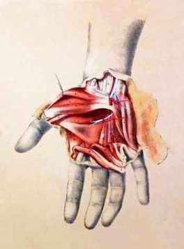 anatomy-hand-detail