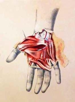 anatomy-hand-detail