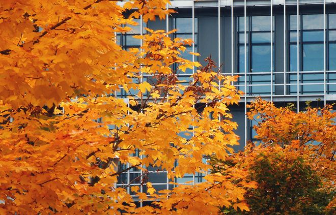 Photo of trees in autumn outside the Rowett Institute