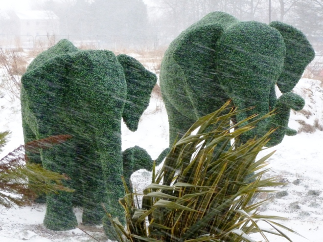 Photo of elephants in the snow outside RACH