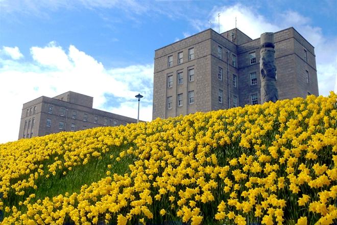 Photo of daffodils outside Ashgrove House