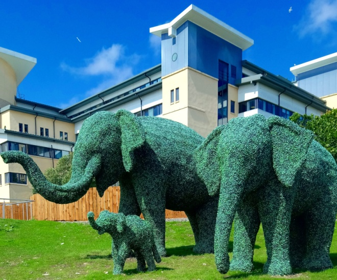 Topiary Elephants at Royal Aberdeen Children's Hospital